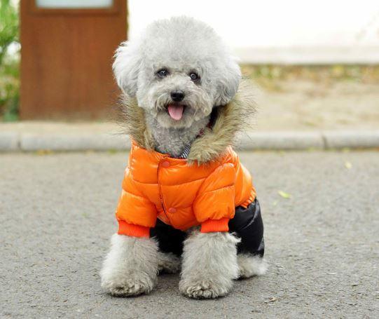 moncler dog parka