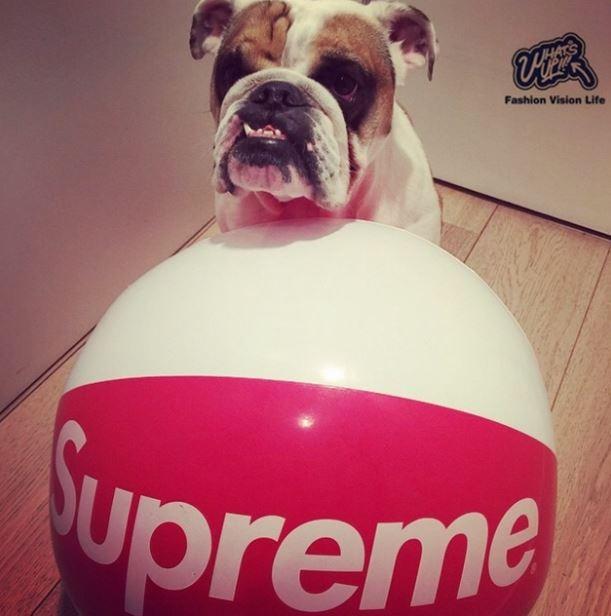Supreme beach balls